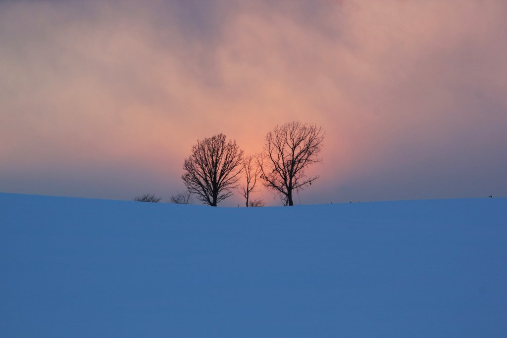 日本美瑛新子樹 Trees of Parent and child, Biei, Hokkaido, Japan