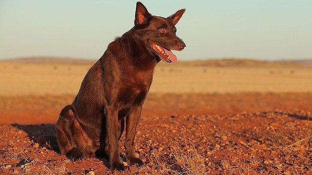 扮演紅狗的狗演員叫KoKo,已在2012年12月去世。