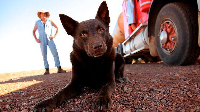 紅狗與每一個礦工皆有一段故。