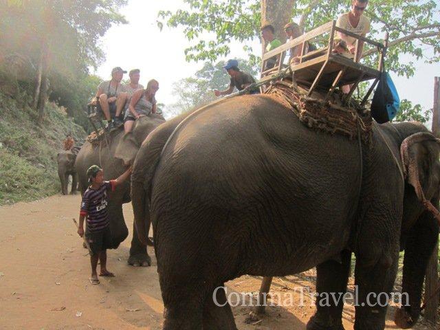 看著人類勞役動物,置身其中深感無奈,觀光事業造就旅客輕易得以與大象相見,卻又害牠們被勞役。