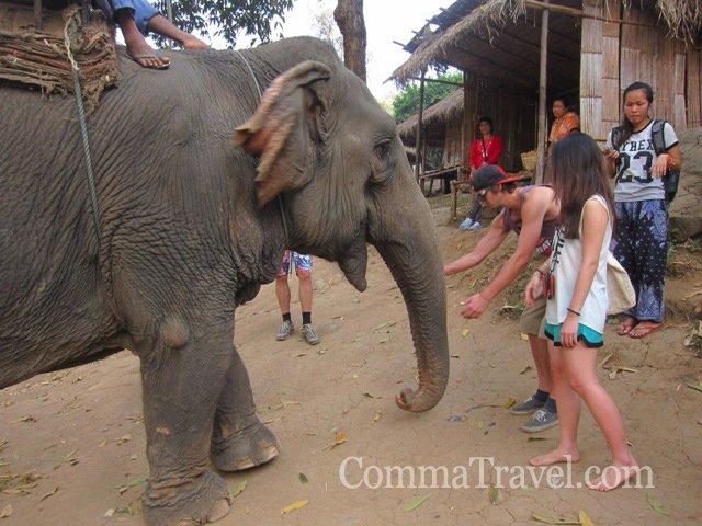 來到大象園,嗯,大象們真的很善良,為了不支持這項旅遊活動,拒絕騎大象。