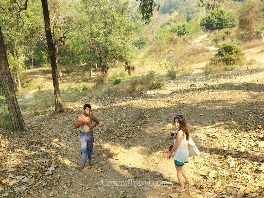 不騎大象,可以與大象在叢林走走。