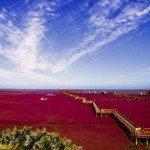 【新聞‧中國】舉世奇觀 盤錦紅海灘