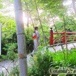 【遊記‧日本】伊豆東京之旅14‧修善寺市內遊