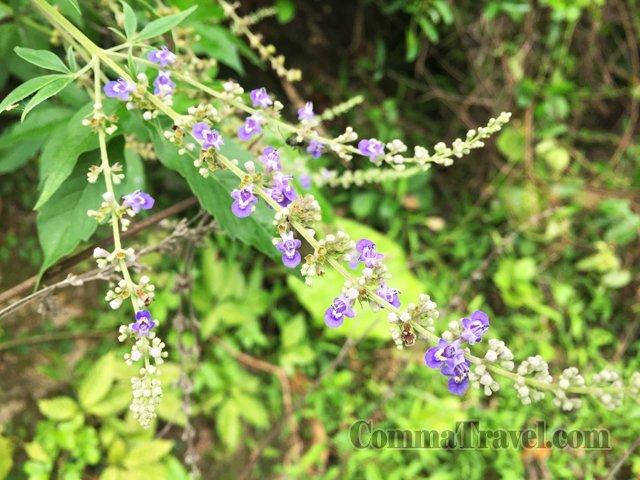 塔門自然景色-花